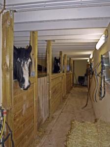 Boxes avec chevaux