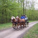 Sur les chemins des bois de Brides