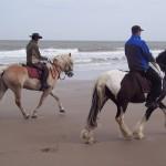 Dressage sur la plage