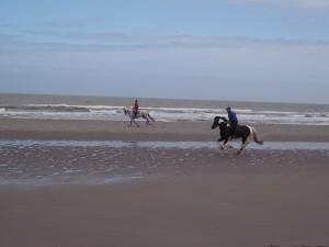 Galops sur la plage